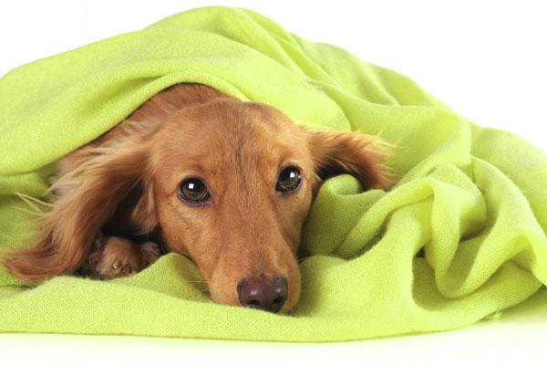 Keeping your dog safe on bonfire night