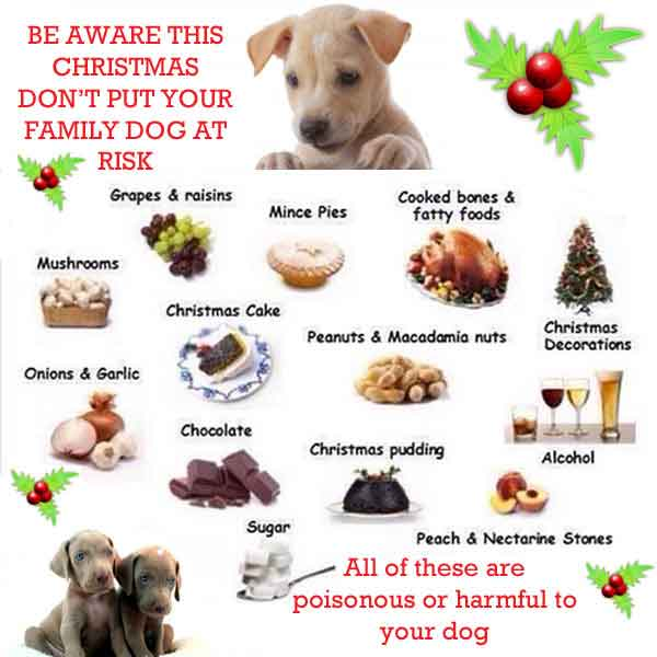 Food that is poisonous to dogs